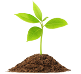 plant-resized-166